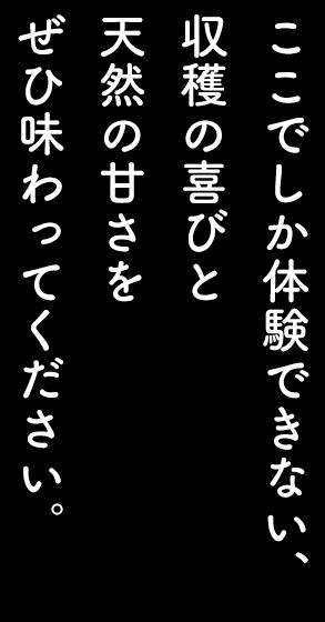 コピー文2