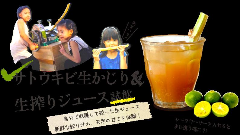 サトウキビ生かじり&生絞りジュース試飲