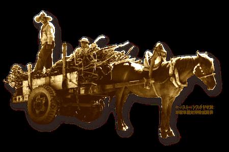 収穫したキビを馬車で運ぶ人々(1945)
