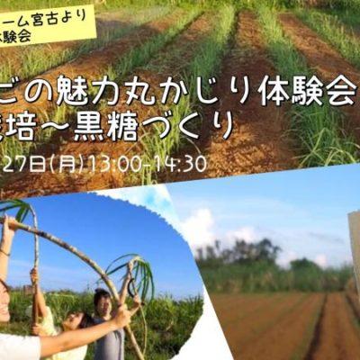 【オンライン】宮古島の魅力をリモートで体験! サトウキビの栽培~黒糖作りまで 『サトウキビの魅力丸かじり』 体験会♪